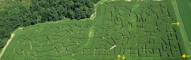 Corn Maze 2011_Small