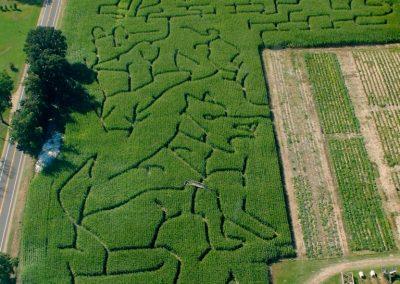 Corn Maze2013 small