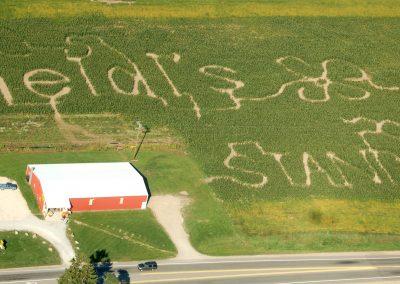 corn maze 2007
